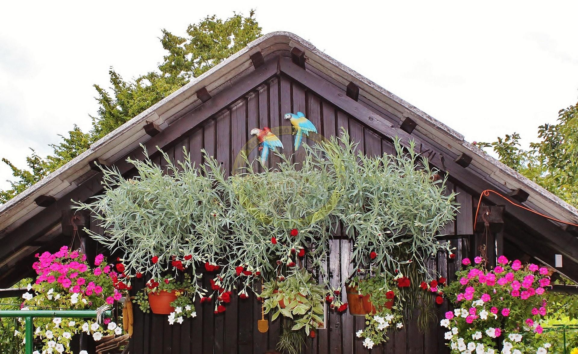 Pod Onišakovo senčnico je lepo posedeti, saj jo čez celo poletje krasijo lepi gorenjski nageljni in petunije.